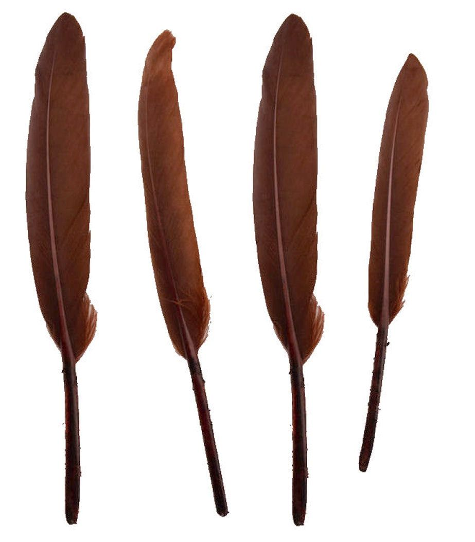 Chesnut Brown Goose Quill Feathers x 10