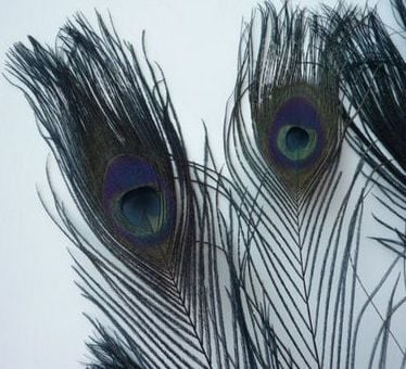 Black Peacock Eye Tail Feather