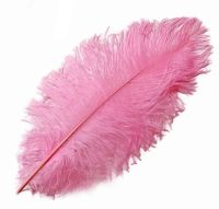 Candy Pink Ostrich Feather