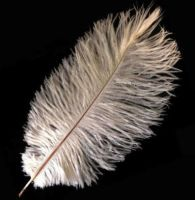 Champagne Ostrich Feather