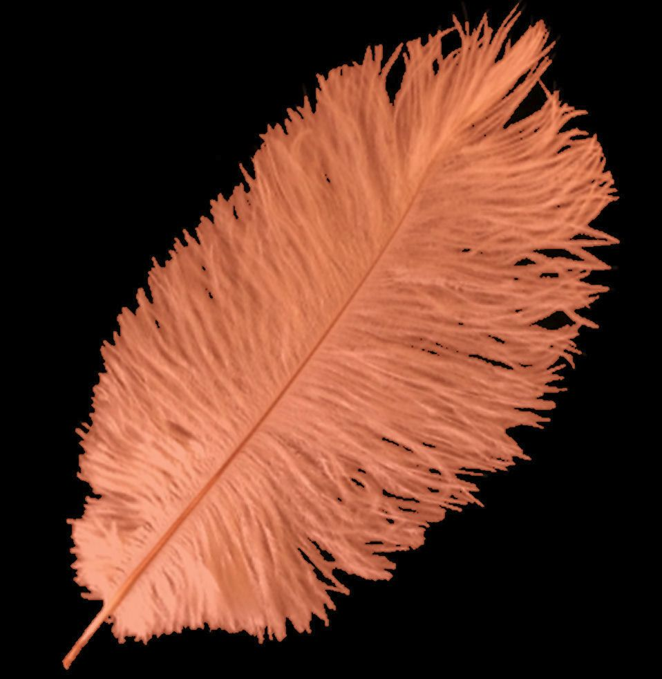 Dark Peach Ostrich Feather