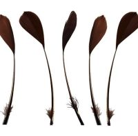 Brown Feathers Stripped Coque Style