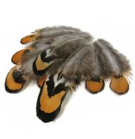 Brown and Grey Pheasant Reeves Feathers