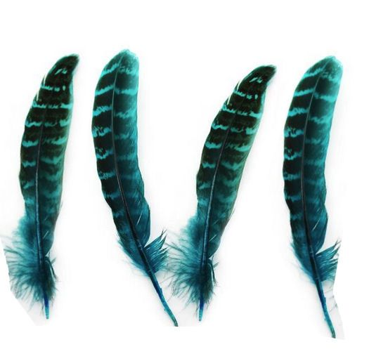Aqua Blue Female Ringneck Pheasant Tail Feathers