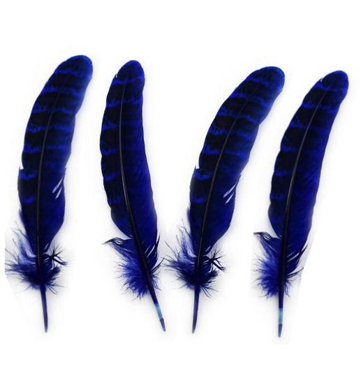 Dark Blue Female Ringneck Pheasant Tail Feathers