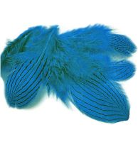 Deep Turquoise Silver Pheasant Feathers x 5
