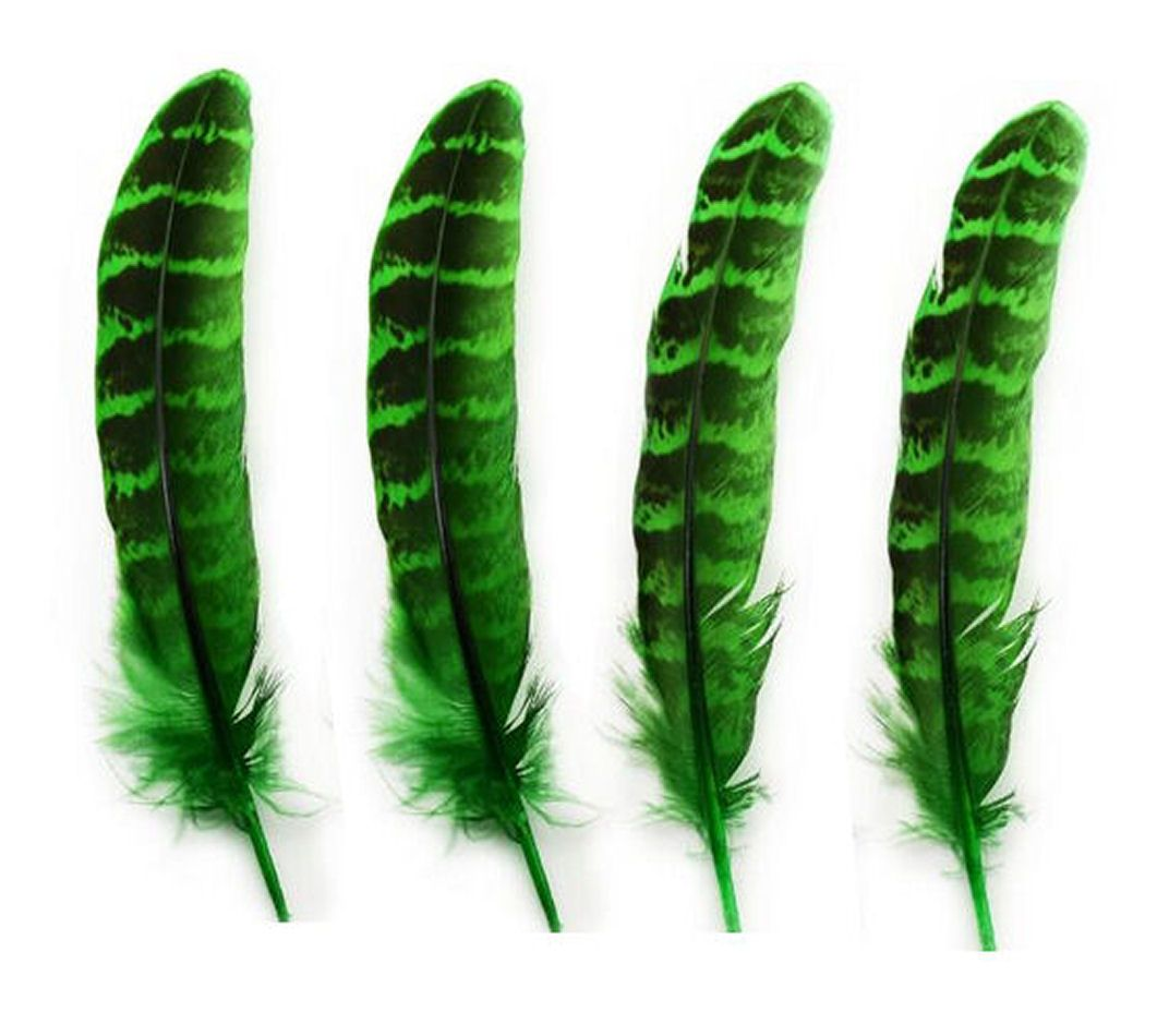 Green Female Ringneck Pheasant Tail Feathers