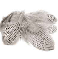 Natural Silver Pheasant Feathers x 5