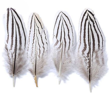 Natural Silver Pheasant Plumage Feathers x 3