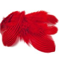 Red Silver Pheasant Feathers x 5
