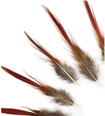 Natural Golden Pheasant Red Top Tail Feathers x 5