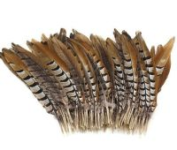 Natural Reeves Pheasant Tail Feather x 5