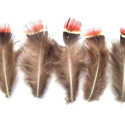 Natural Pheasant Red Top Plumage Feathers x 5