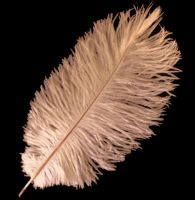 Peach Ostrich Feather
