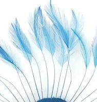 Dark Turquoise Rooster Feathers Hackles Stripped x 10