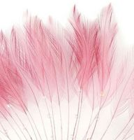 Rose Pink Rooster Feathers Hackles Stripped