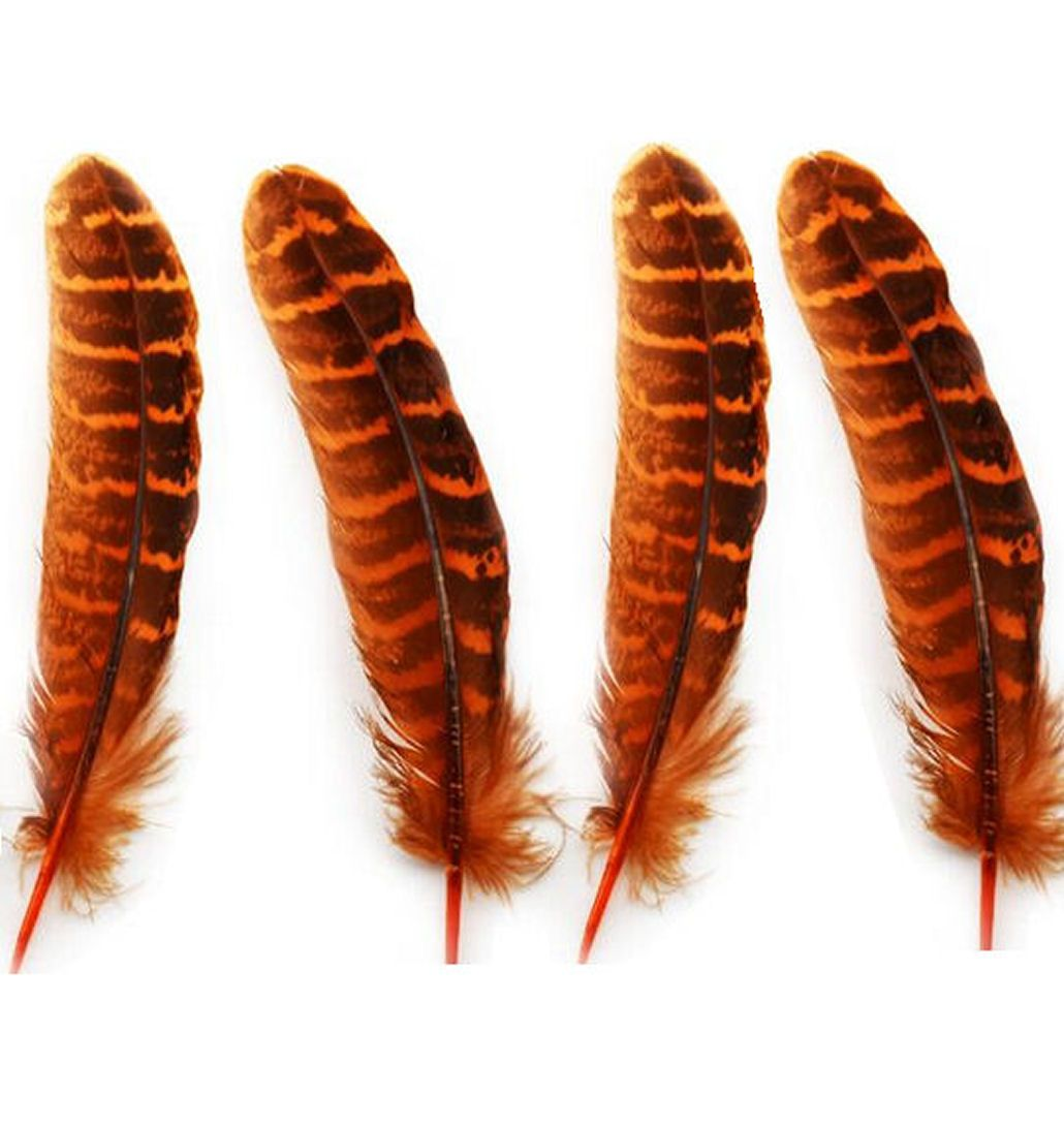 Orange Female Ringneck Pheasant Tail Feathers