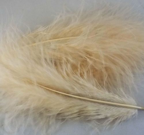 Champagne Marabou Feathers Handpicked x 12