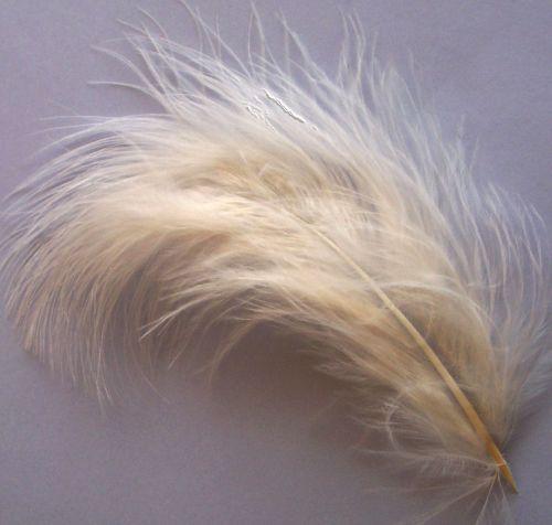 Eggshell Large Marabou Feathers x 20
