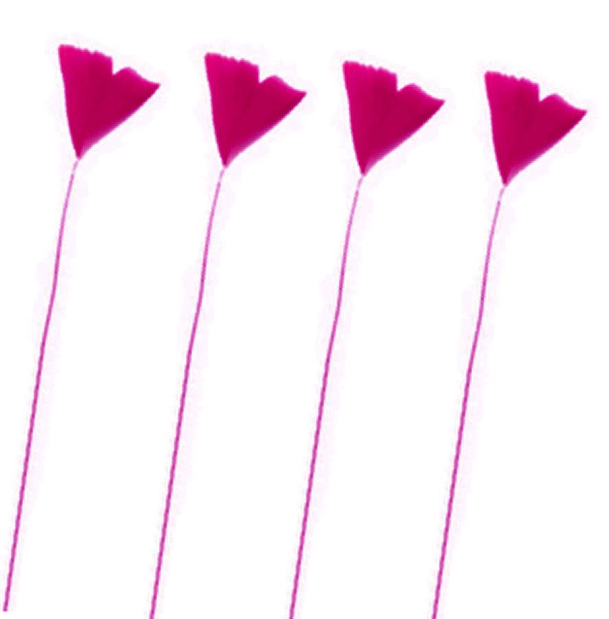 Dark Pink Stripped Turkey Feathers x 6