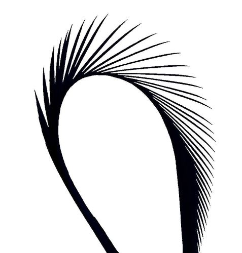 Black Goose Biot Feather