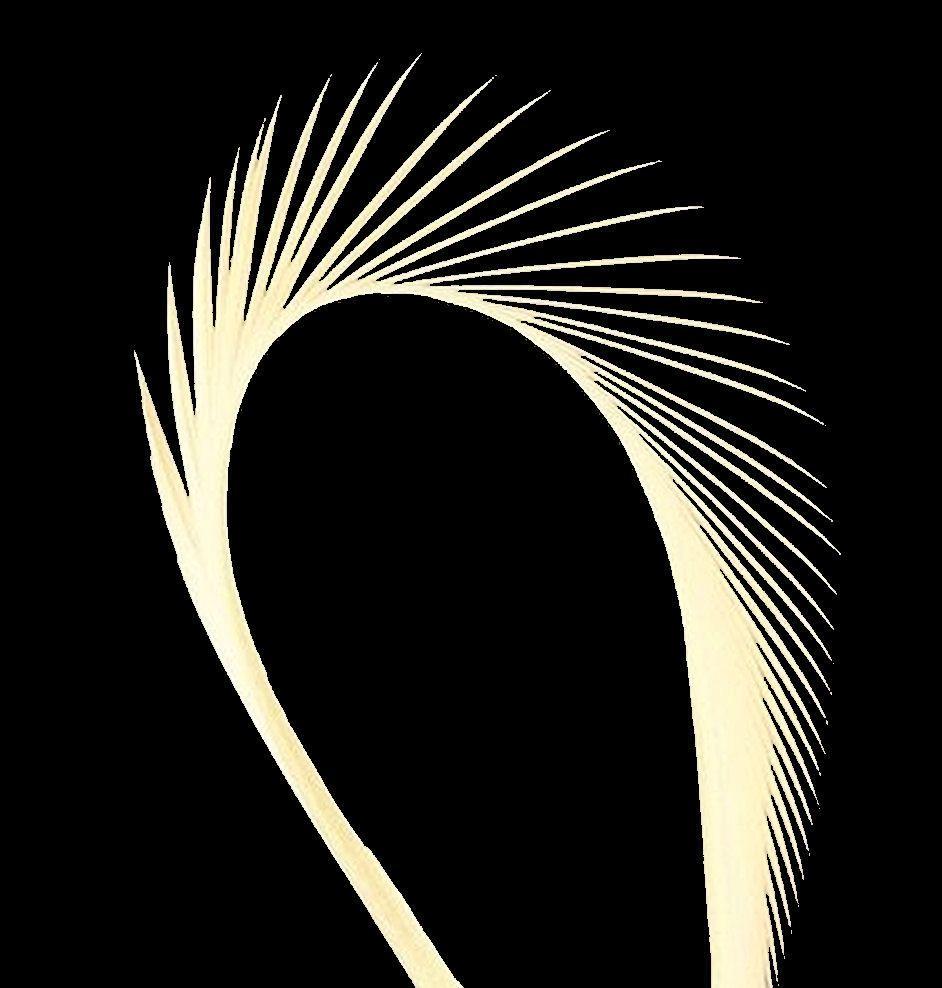 Cream Goose Biot Feather