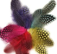 Guinea Fowl Feathers (Spotty) Day Glo Mix