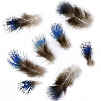 Blue Peacock Wing Feathers x 3