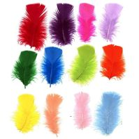 Turkey Coquille Feathers - Assorted Pack