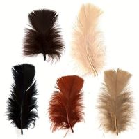 Turkey Coquille Feathers - Autumn Shades