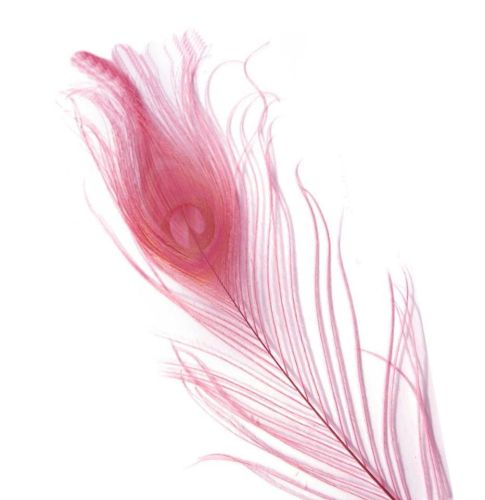 Rose Pink Peacock Eye Tail Feather