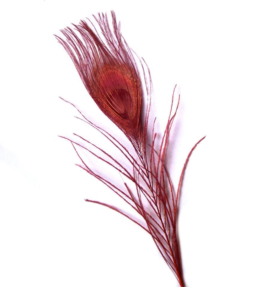 Burgundy Peacock Eye Tail Feather