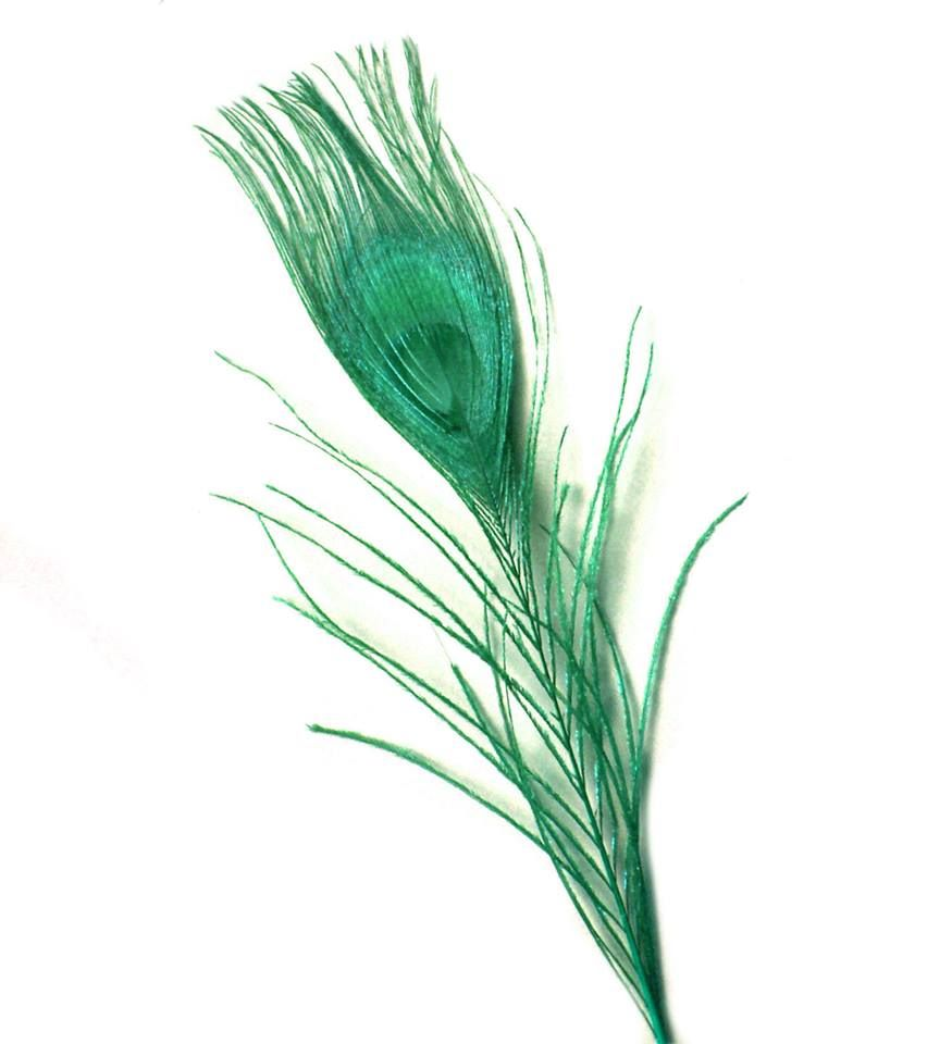 Emerald Green Peacock Eye Tail Feather