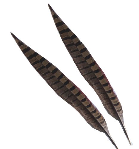 Natural Ringneck Pheasant Tail Feather (14 inch)