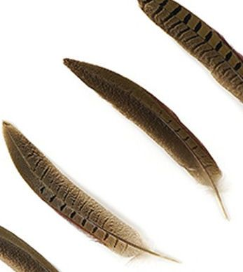 Natural Ringneck Pheasant Tail Feather  x 5