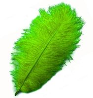 Fern Green Ostrich Feather