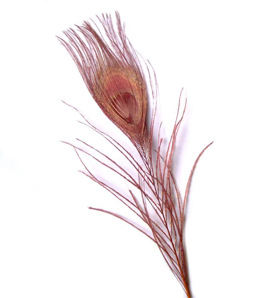 Brown Peacock Eye Tail Feather