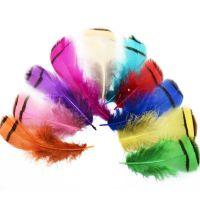 Chukar Partridge Feathers x 4
