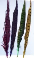 Dyed Ringneck Pheasant Tail Feather (8 to 10 inch)