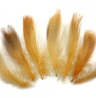 Golden Yellow Speckled Flank Feathers x 10