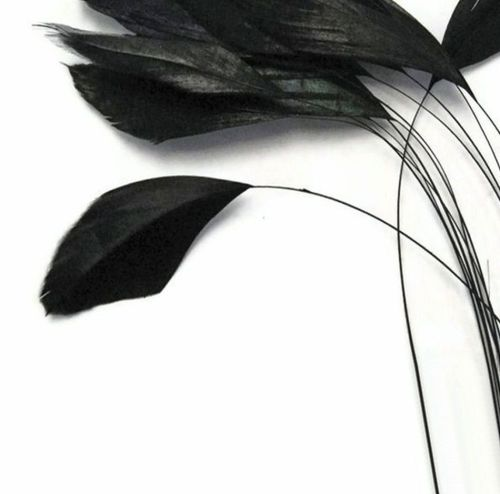 Black Stripped Coque Tail Rooster Feathers x 6