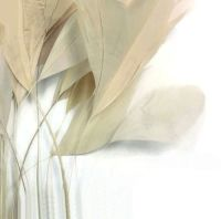 Ivory Cream Stripped Coque Tail Rooster Feathers x 6