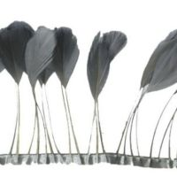 Silver Stripped Coque Tail Rooster Feathers x 10