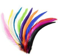 Rooster Coque Tail Feather 12 inches
