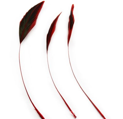 Red Half Bronze Two Tone Stripped Feathers x 3