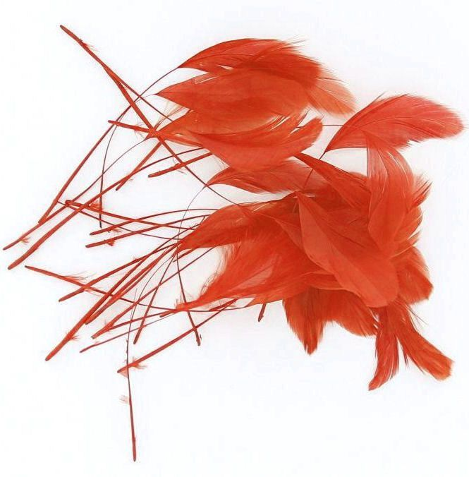 Orange Trimmed Rooster Coque Tail Feathers - Clearout