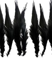 Black Rooster Saddle Feathers x 10