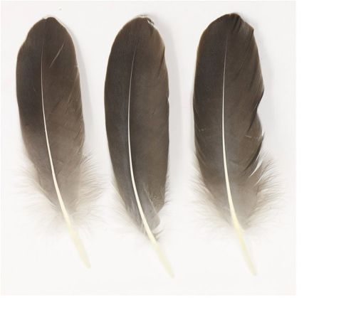 Natural Goose Quill Feathers x 4