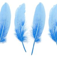 Pale Blue Goose Quill Feathers x 4