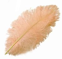 Pink Champagne Ostrich Feather